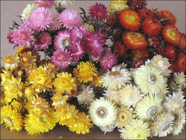 Best dried flowers flowers ideas for review - Best dried flower arrangements a colorful winter ...